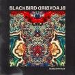 Tangerine Sky专辑 Blackbird Blackbird
